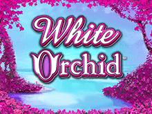 Играть White Orchid онлайн